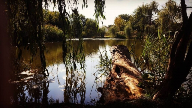 Romania Botanical Lake